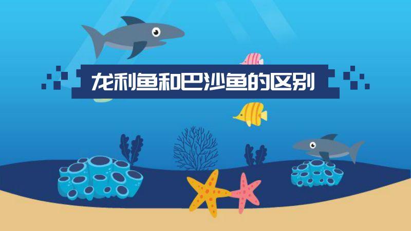 龙利鱼和巴沙鱼的区别